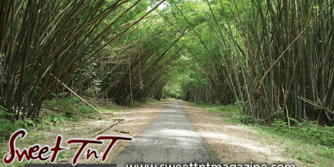 Bamboo Cathedral in Chaguaramas, Natural landscape, beautiful scene for hikers by Marika Mohammed.