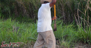 Farmer Fyzul Khan, father Candida Khan and Katrina Khan work the land, struggles with Dry Season and thieves, wears white t shirt, brown khaki long pants in Sweet T&T, Sweet TnT, Trinidad and Tobago, Trini, vacation, travel